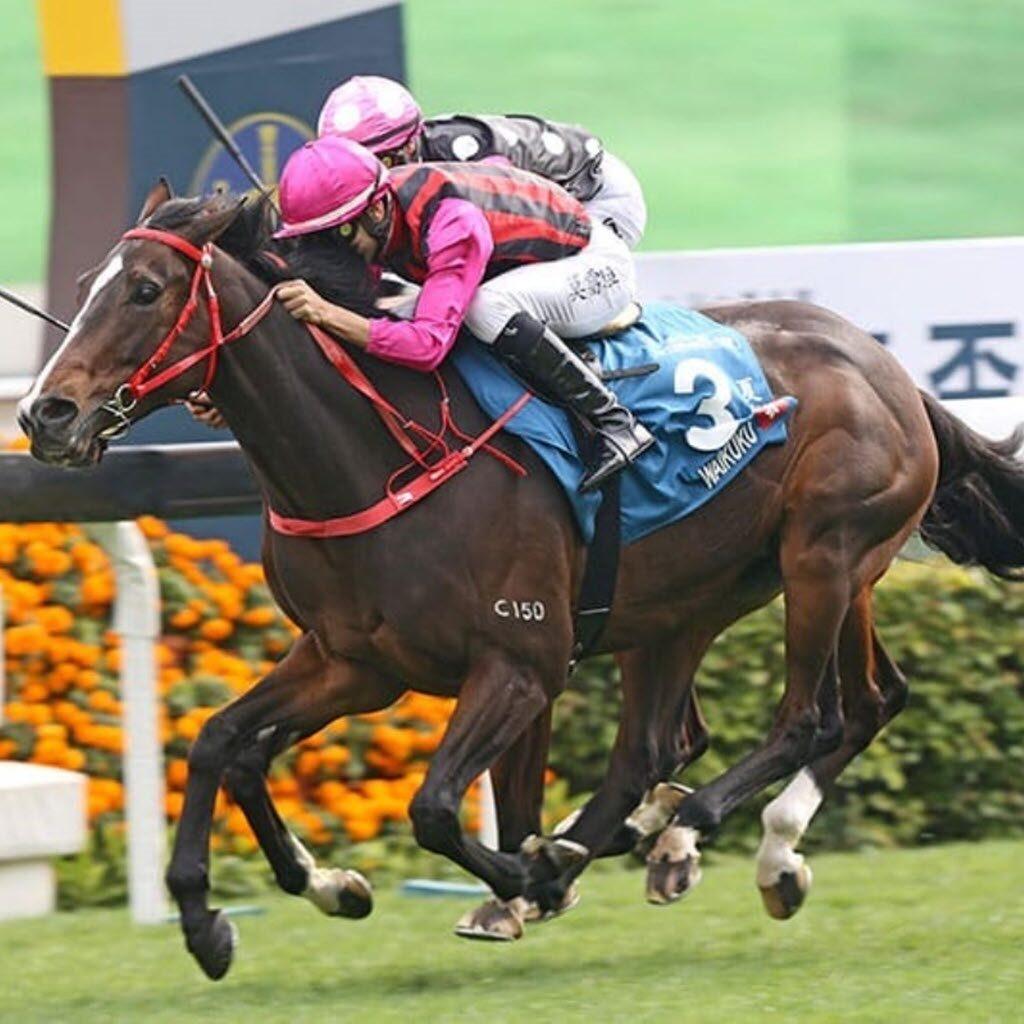 2020 Hong Kong Group 1 winner Waikuku